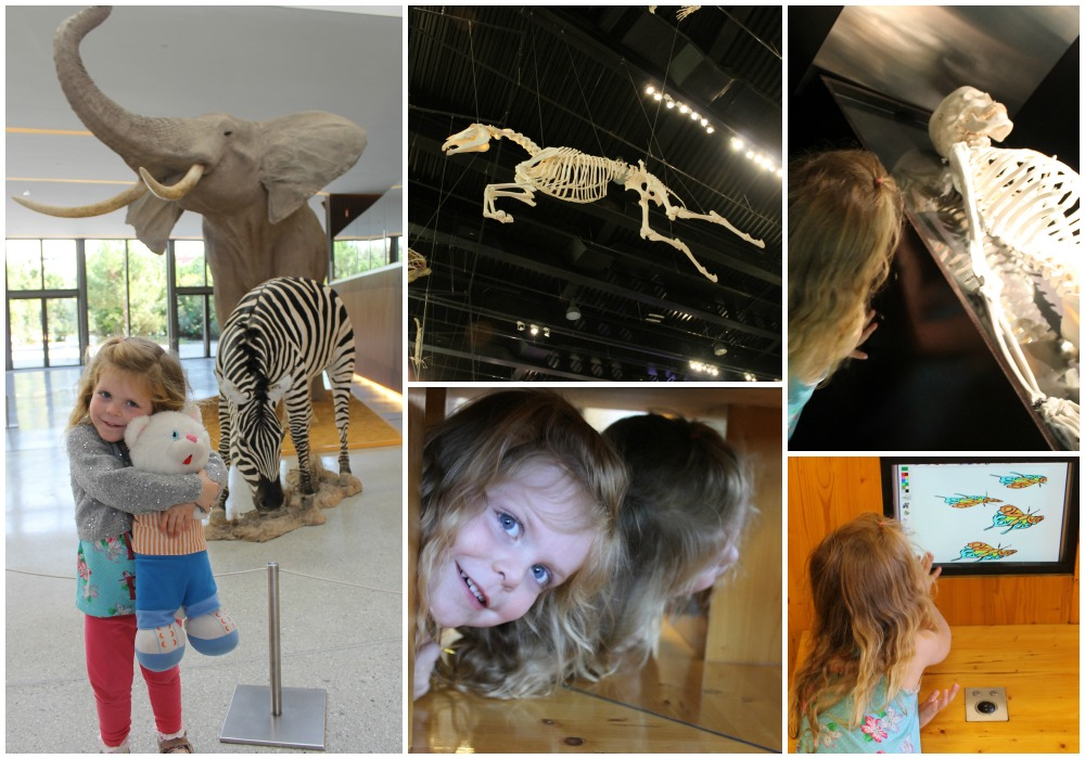 indoorssciencemuseumCollage