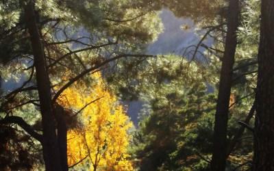 Autumn walk in Parque Natural de Sierra Nevada