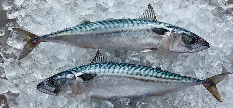 mackerel on ice