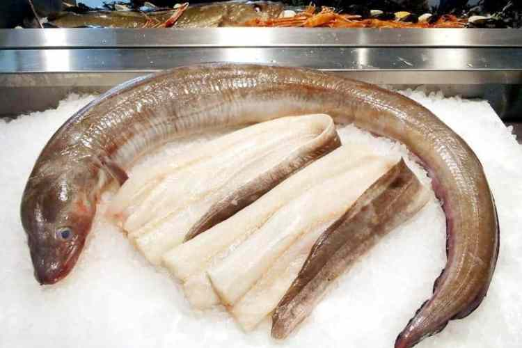 conger eel and fillets