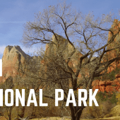 Episode 11: Zion National Park