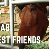 Episode 15: Kanab & Best Friends Animal Sanctuary | Utah RV Travel Camping
