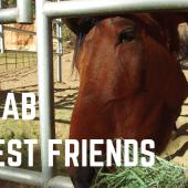 Episode 15: Kanab & Best Friends Animal Sanctuary | Utah RV Travel Camping