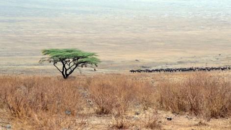 006 Tanzanie