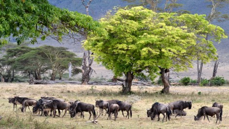 011 Tanzanie
