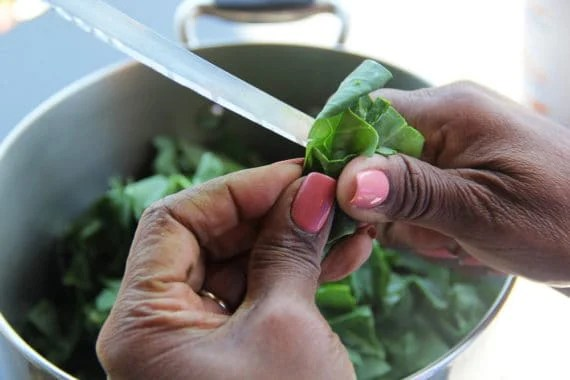 Southern Collard greens being cut by african american hands