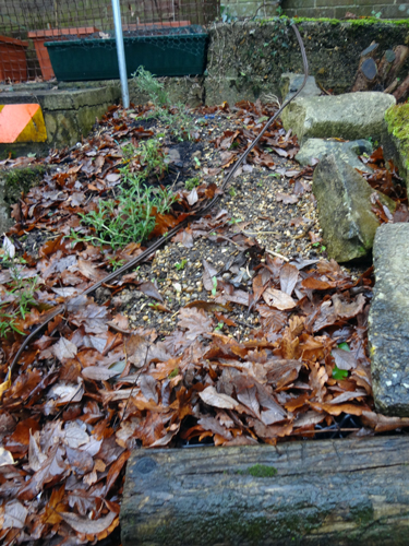 December 2016, seedlings up and waiting for Spring