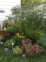 Flower bed in back yard: Butterfly bush, 2 peonies, Mexican Hat daisies, Calendula, lavender and many more.