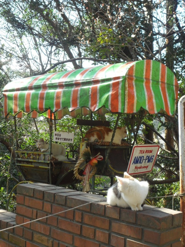 Chariot à chats.