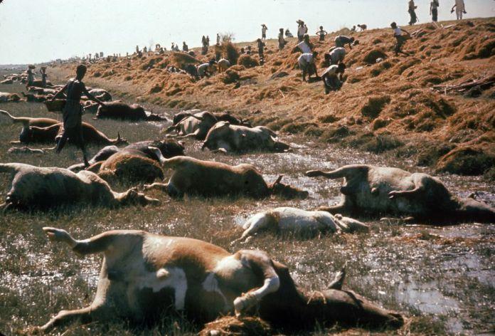 Ciclon de Bhola de 1970 - Los 10 desastres naturales más mortíferos de la historia