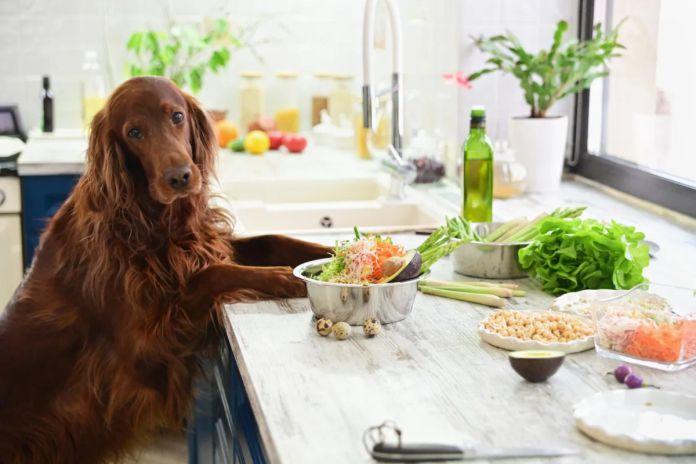 comida para perros - ¿Qué pasa si solo le das a tu perro comida para humanos?