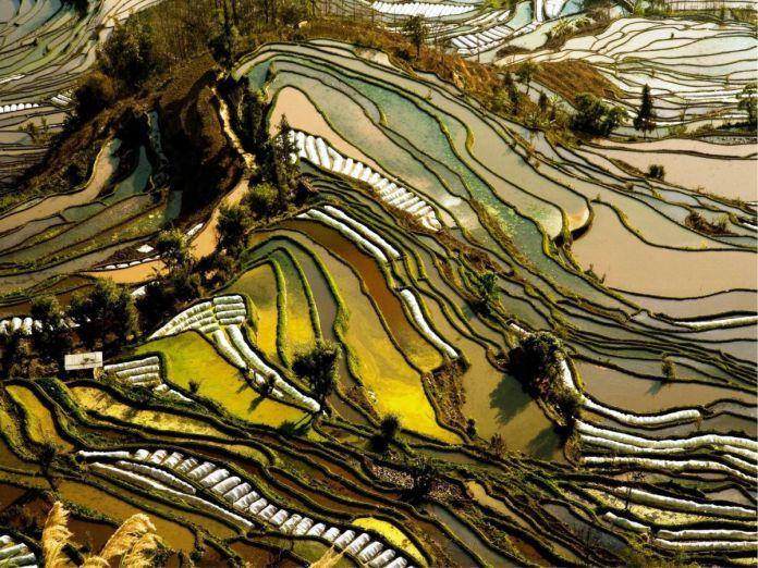 Arrozales en terrazas de Yunnan - 29 de los paisajes más surrealistas de nuestro hermoso planeta