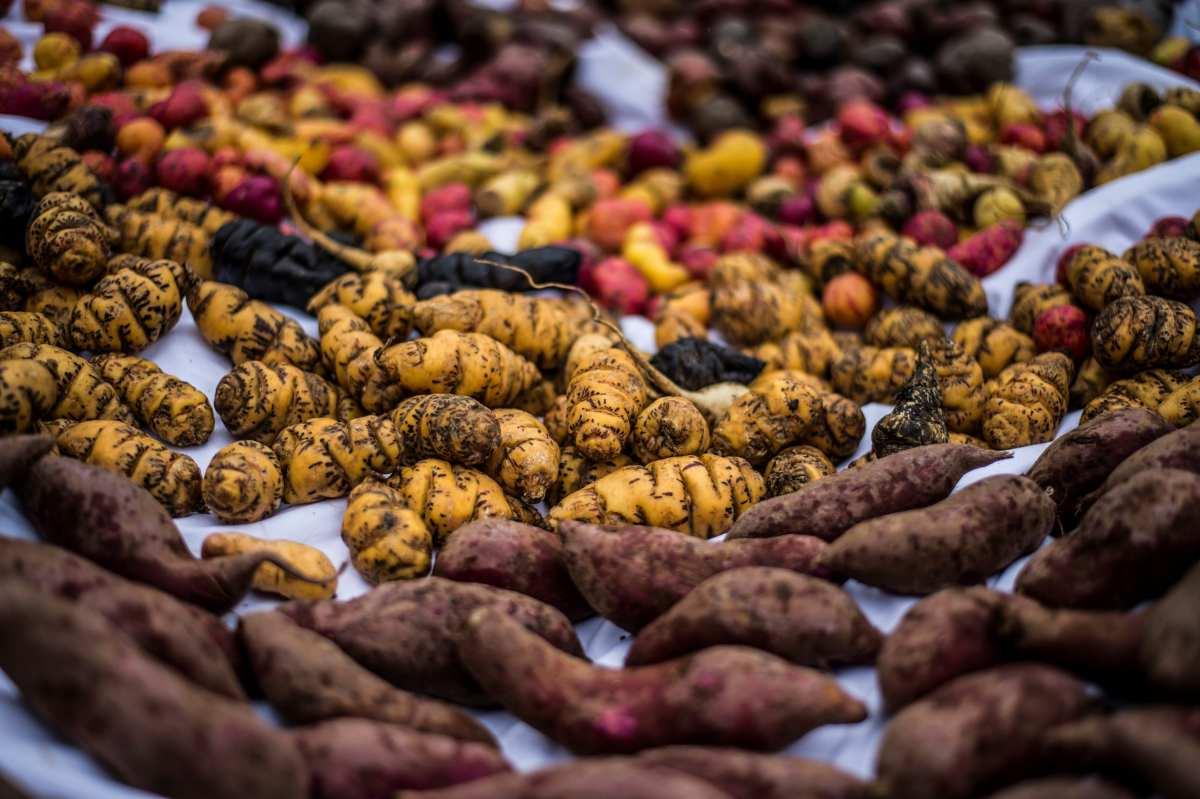 Día Nacional de la Papa en Perú patatas
