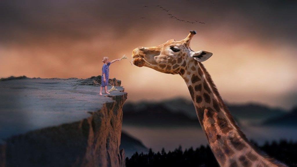 enfant sur la montagne nourrissant une girafe géante