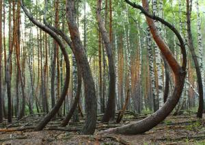 La souplesse des arbres