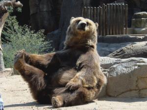 Un ours assis