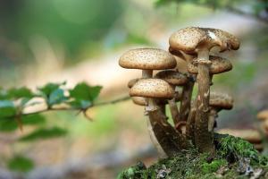Champignons en forêt