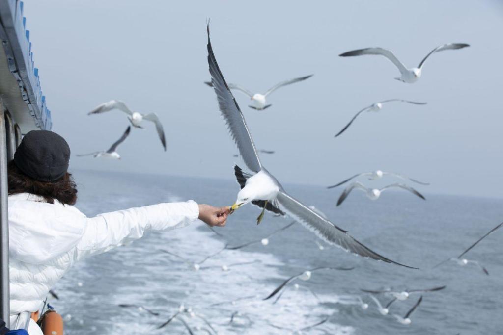 Une mouette attrapant de la nourriture en plein vol