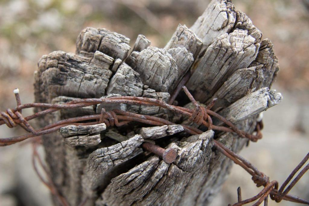 Un morceau de bois avec des barbelés