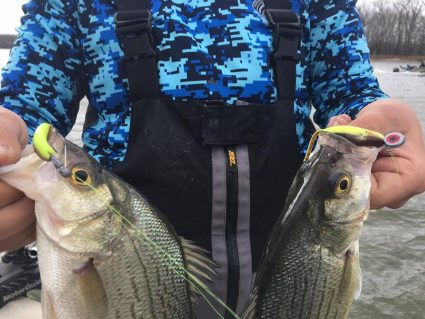 White bass at Grand Lake March 17