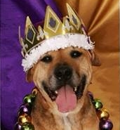 Celebrate Mardi Paws & Support Grove Humane Society