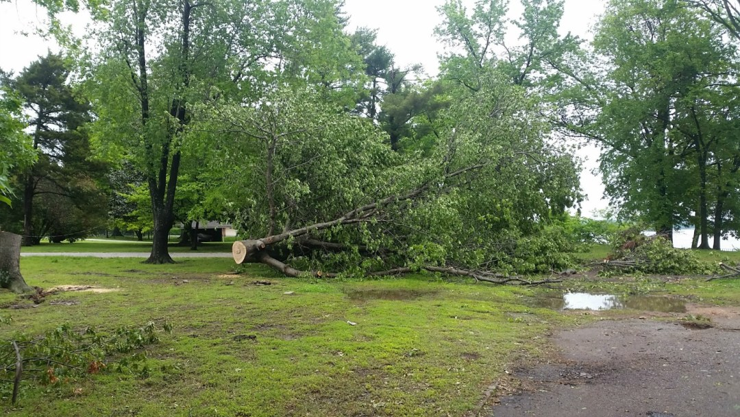 Grand Lake Oklahoma Tree Removal Services
