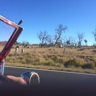 DeadTrees