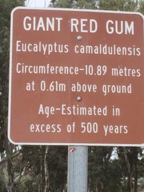 biggumtreesign