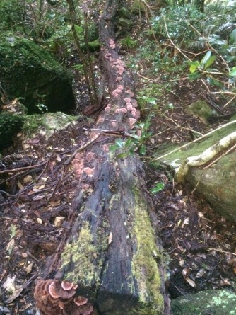 bluegumforest15