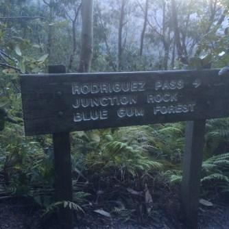 bluegumforest20