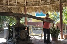 sugar cane grinding