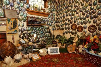 pava shells