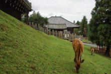 deer in shrine