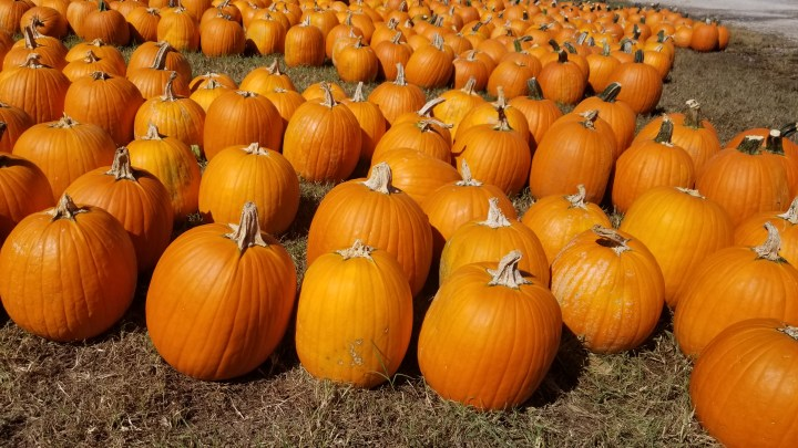 Fall Festival at Lucky Ladd Farm {Tennessee}
