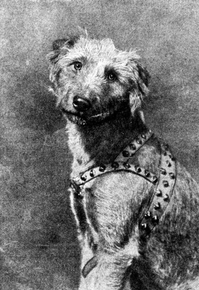 Грамотная собака Рольф