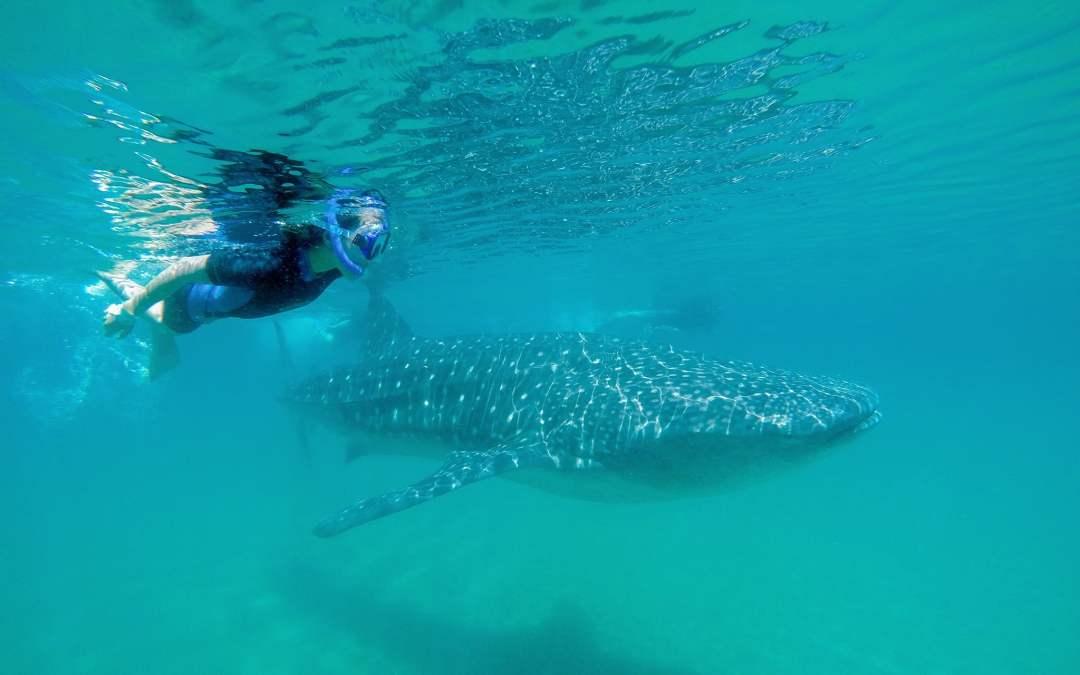Grand Solmar Rancho San Lucas Snorkeling along Cabo's Corridor