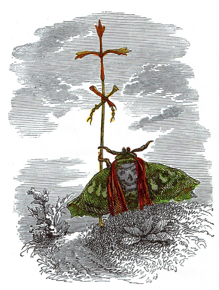 grandville-animals-401-insect-divine-slavery-of-blessed-hive