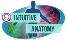 THETAHEALING® Intuitive Anatomy 02.08.20 – 20.08.20 in Ramat Gan