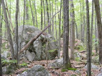 Glacial erratics are scattered around; typical of southern NH
