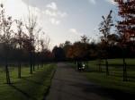 quiet path home