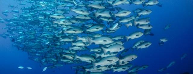 fish ocean health