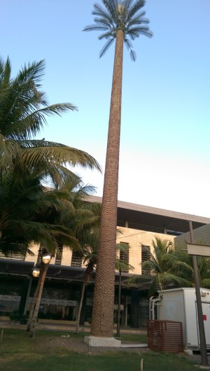 KAUST palm mast