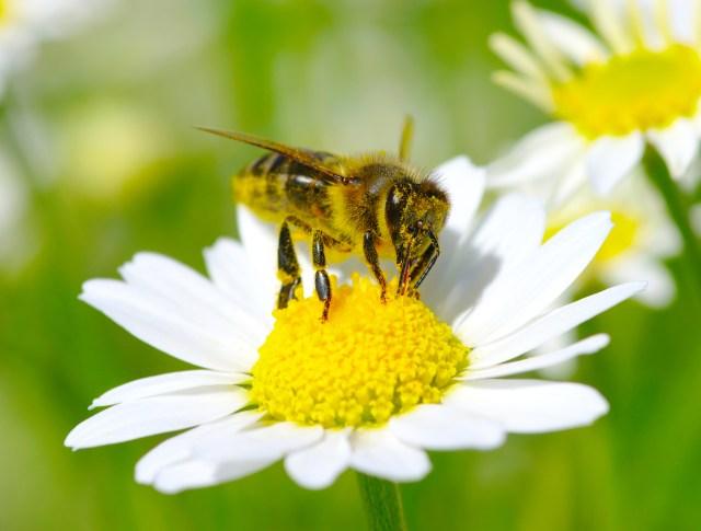 Bee pollinating flower iStock-120552826.jpg