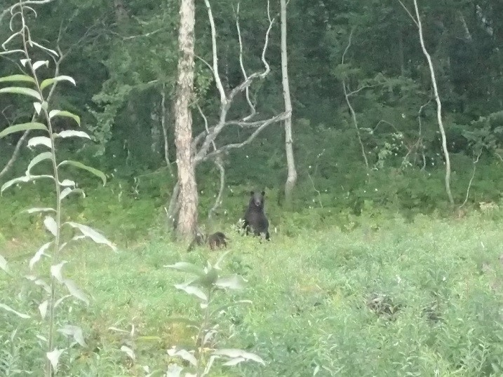 small bears in the undergrowth