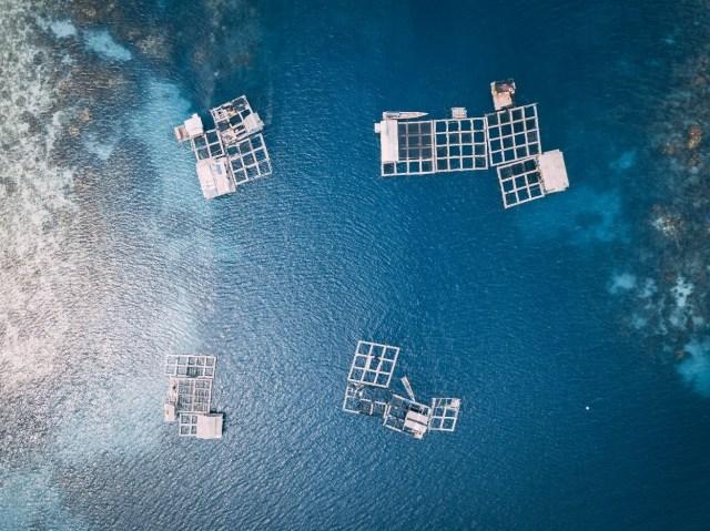 Aerial photograph of an aquafarm
