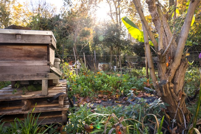 The secret garden and bee hives in autumn at the South Kensington campus