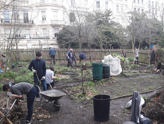 Staff and students working on the allotment at Imperial's South Kensington Campus