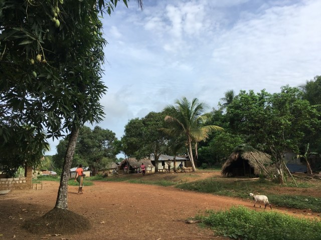 A village in Grand Cape Mount County, Liberia. Lots of trees and a handful of small houses with a sheep and two people walking in the background