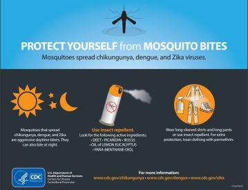 mosquito_infographic_CDC_0811