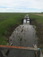 irrigation project 1